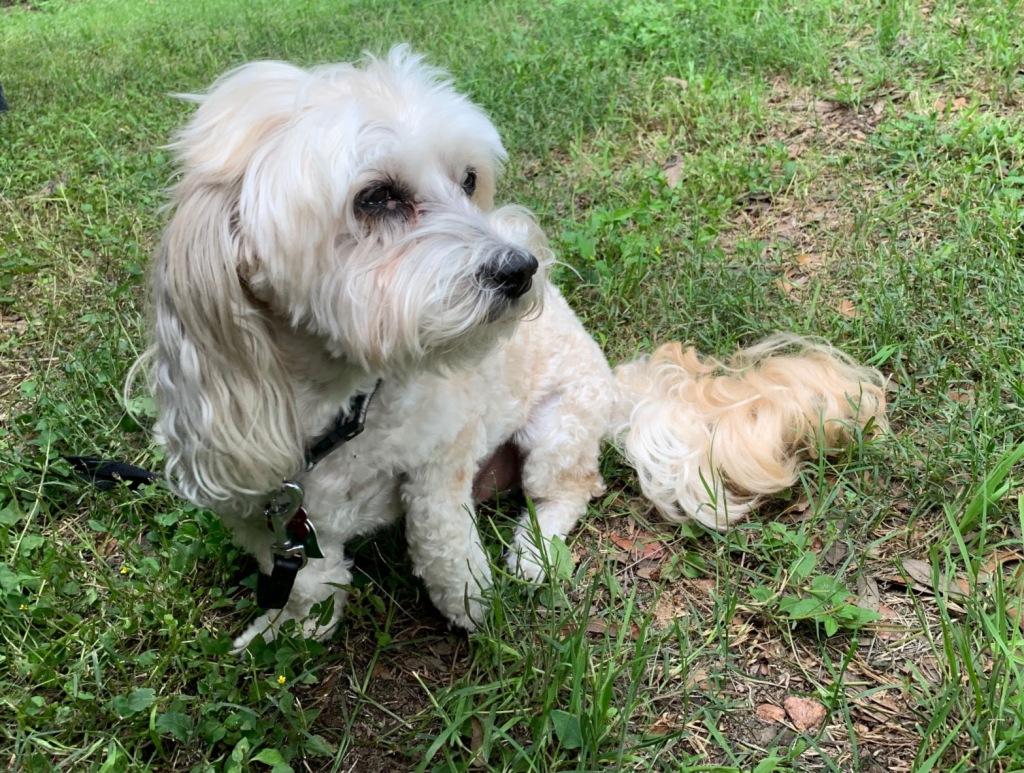 Photo of Bear the dog